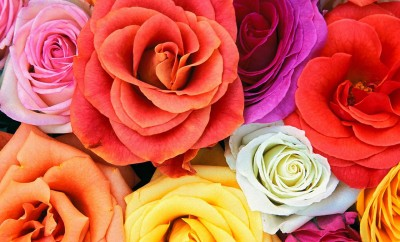 Roses_Bunch_Of_Flowers