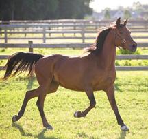 centaur_running_horse_as11