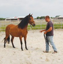 centaur_training_dean_leading_horse_on11