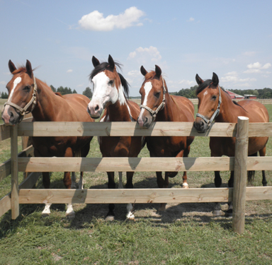 centaur_training_horses_on11