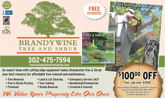 Tips For Choosing A Tree Company, The Women's Journal