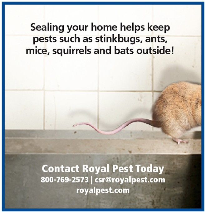 """3 Ways To """"Pest Winterize"""" Your House, The Women's Journal"""